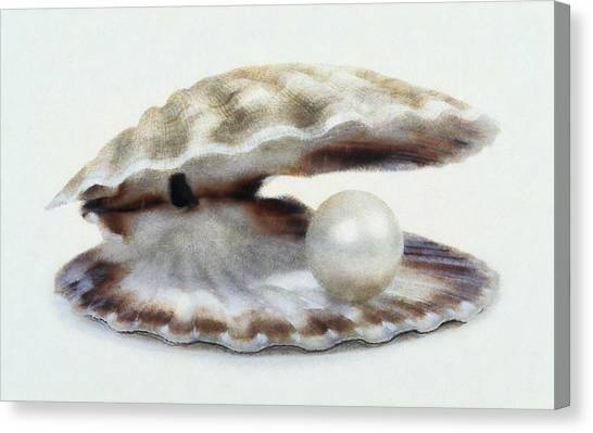 Oyster With Pearl Canvas Print