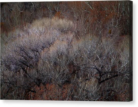 Ozarks Trees #5 Canvas Print