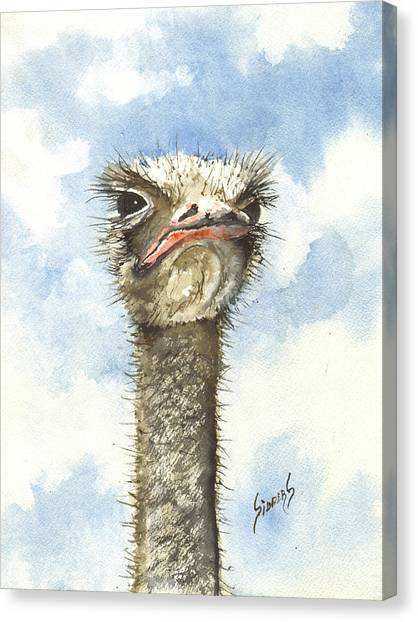 Ostriches Canvas Print - Ozzie by Sam Sidders