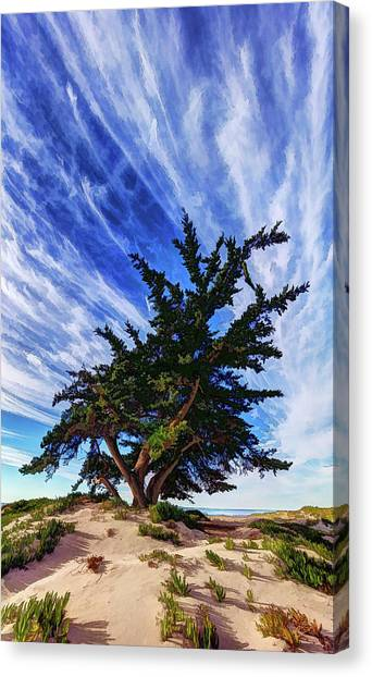 Pacific Beach Juniper Canvas Print