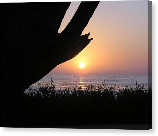 Pacific Cypress Sunset Canvas Print by Richard Mansfield