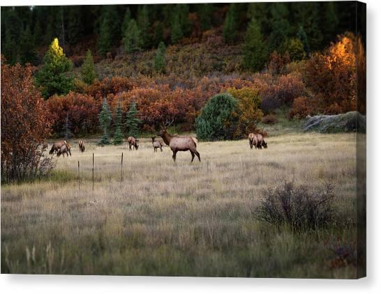 Canvas Print featuring the photograph Pagosa Autumn Elk by Jason Coward