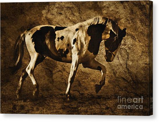 Paint Horse Canvas Print