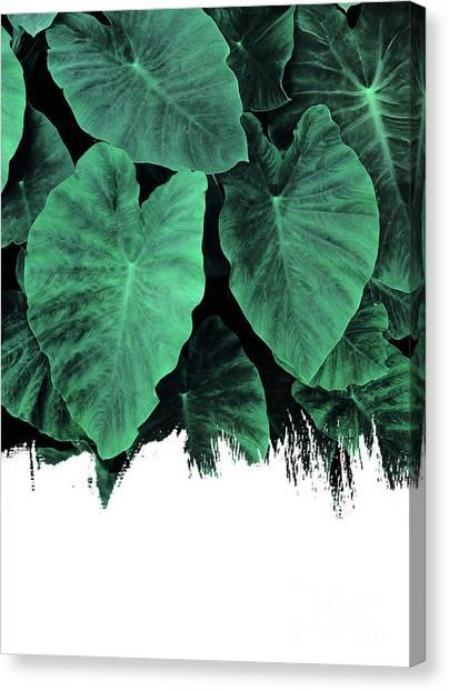 Paint On Jungle Canvas Print