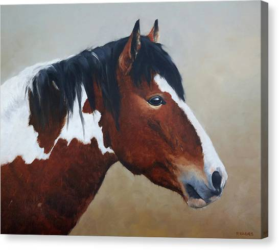Paint Stallion Canvas Print