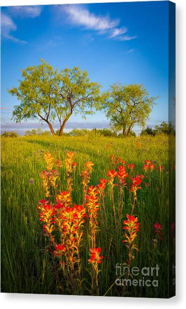 Prairie Sunrises Canvas Print - Paintbrush On Fire by Inge Johnsson