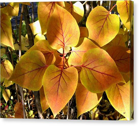 Lilac Bush Canvas Print - Painted Autumn Lilac by Will Borden