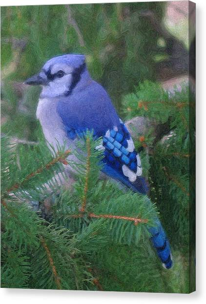 Painted Blue Jay  Canvas Print by Thomas  MacPherson Jr