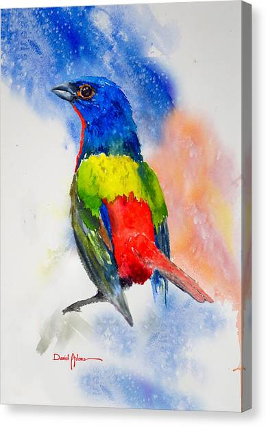 Da189 Painted Bunting Daniel Adams Canvas Print