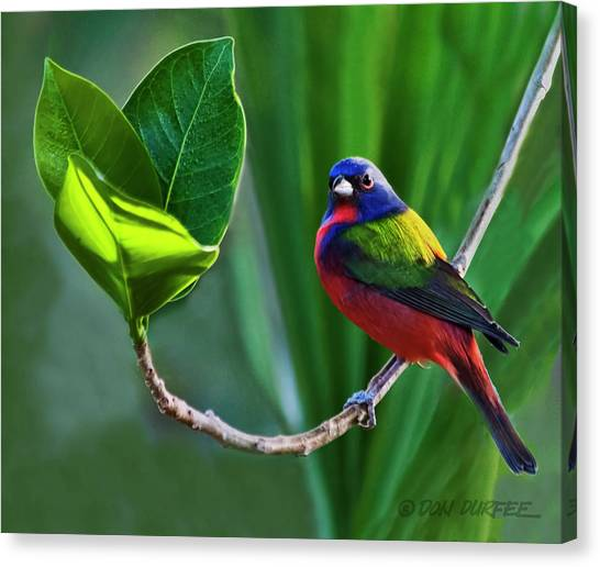 Canvas Print - Painted Bunting by Don Durfee