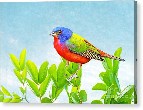Buntings Canvas Print - Painted Bunting by Laura D Young