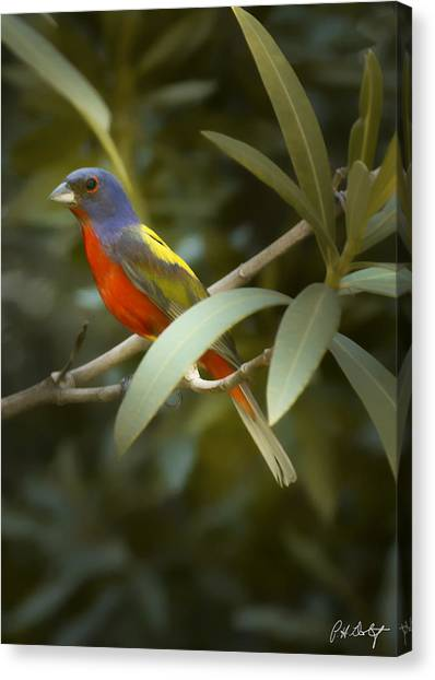 Buntings Canvas Print - Painted Bunting Male by Phill Doherty