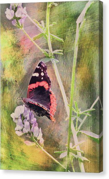 Painted Butterfly Canvas Print by James Steele