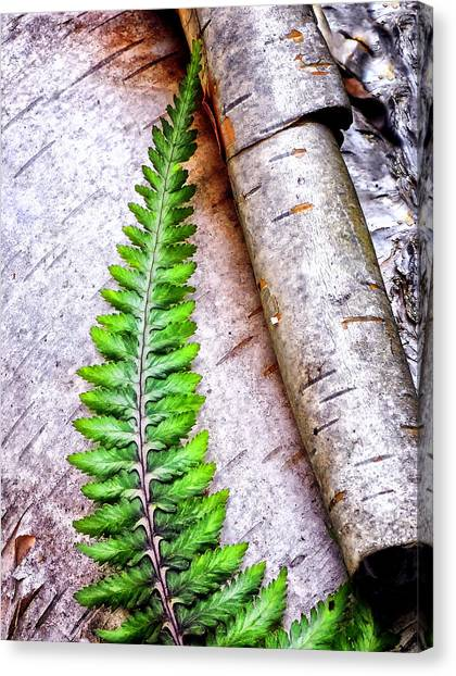 Canvas Print - Painted Fern By Birch by Peg Runyan