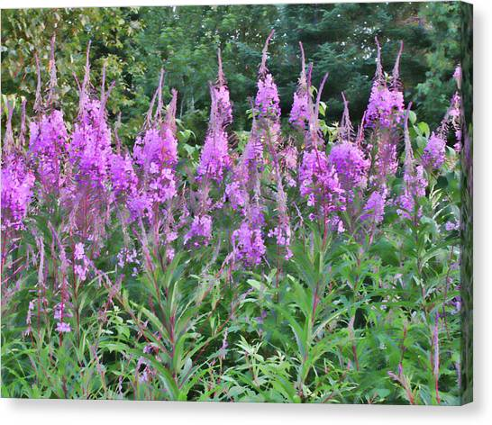 Painted Fireweed Canvas Print