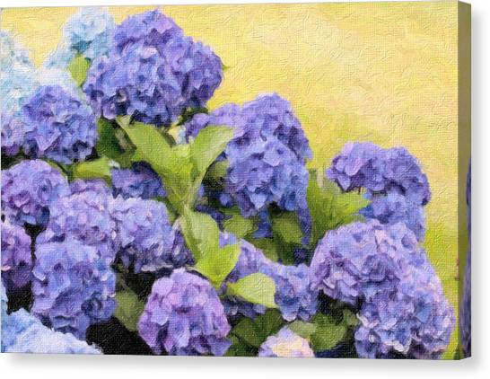 Painted Hydrangeas Canvas Print