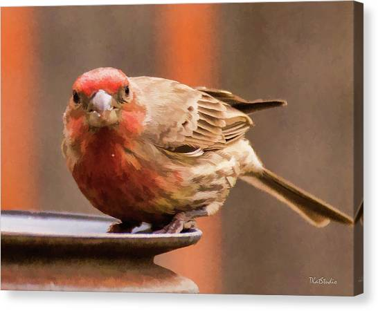 Painted Male Finch Canvas Print