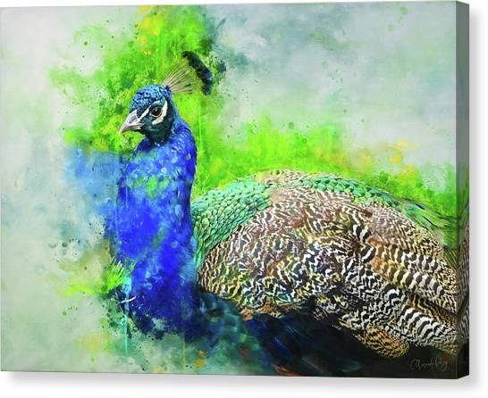 Canvas Print - Painted Peacock by Amanda Lakey
