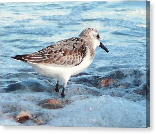 Painted Piper Canvas Print