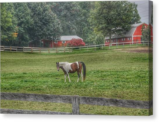 1005 - Painted Pony In Pasture Canvas Print