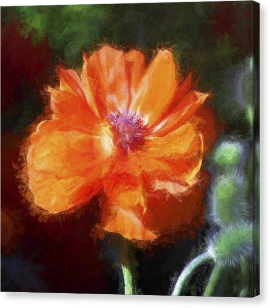 Painted Poppy Canvas Print
