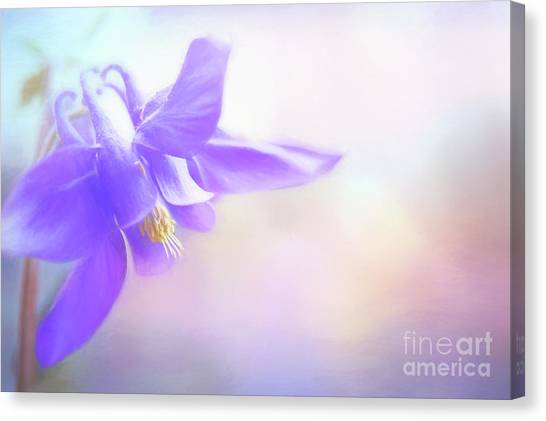 Painted Purple Columbine Canvas Print