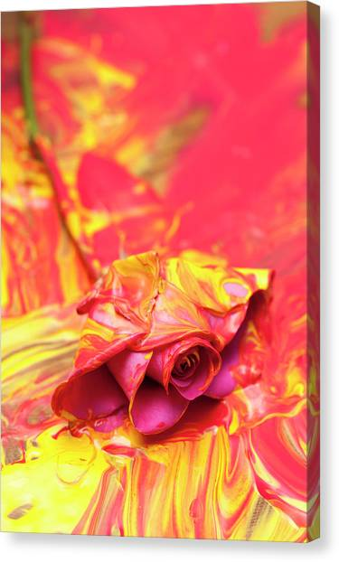 Canvas Print - Painted Rose by Richard Nixon