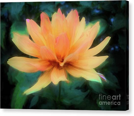 Painted Tangerine Dahlia Canvas Print