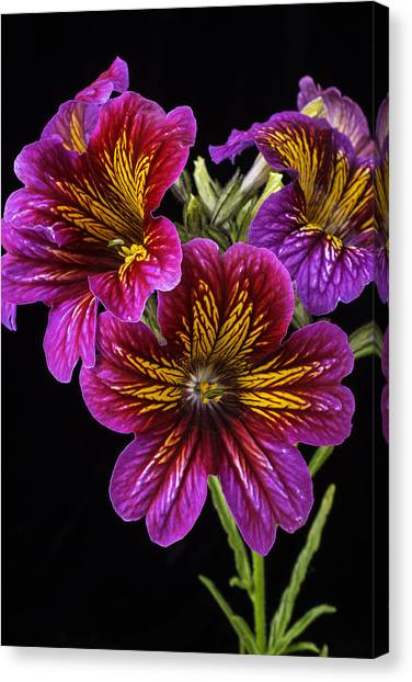 Tongue Canvas Print - Painted Tongue Flowers by Garry Gay