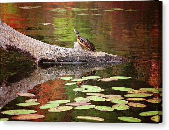 Painted Turtle Canvas Print