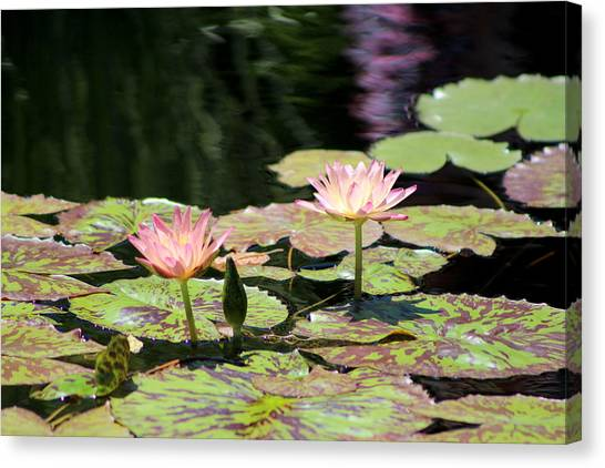 Painted Waters - Lilypond Canvas Print