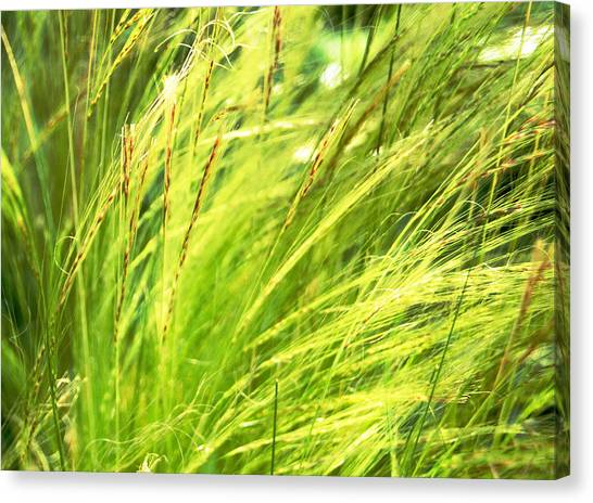 Painting The Wildgrass Canvas Print by Jean Booth