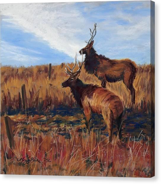 Pair O' Bulls Canvas Print