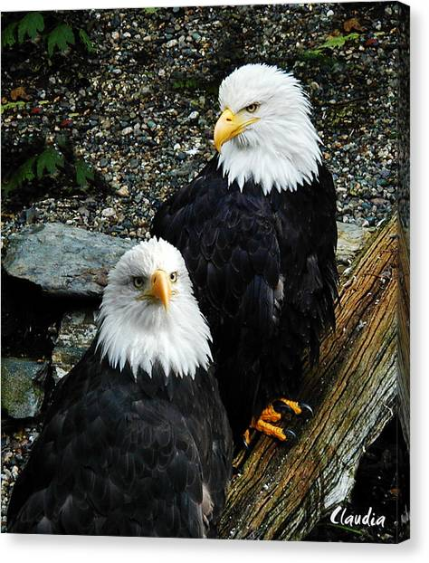 Pair Of American Eagles Canvas Print