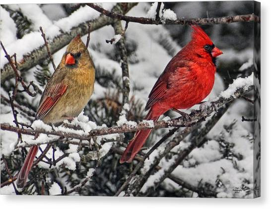 Canvas Print - Pair Of Cardinals In Winter by Peg Runyan