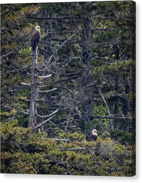 Canvas Print featuring the photograph Pair Of Eagles by David A Lane