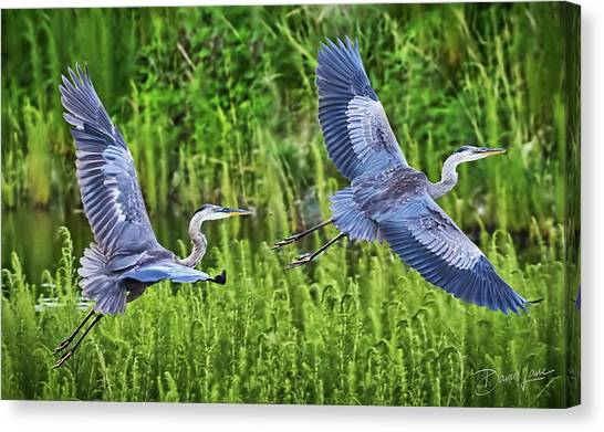 Pair Of Great Blue Herons  Canvas Print