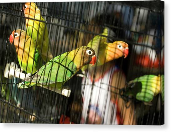 Pair Of Keets Canvas Print by Carl Purcell