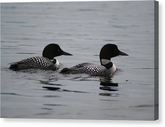Pair Of Loons Canvas Print