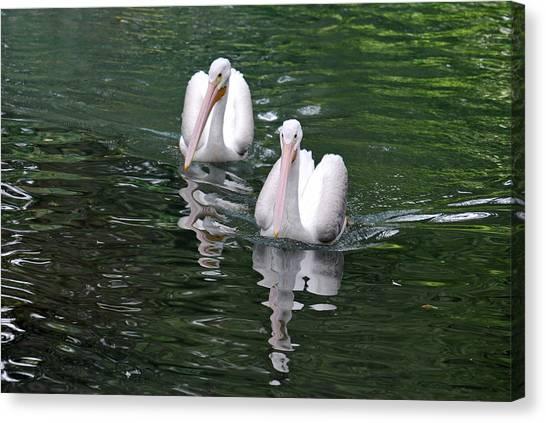 Pair Of Pelicans Canvas Print by Teresa Blanton