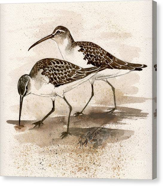 Pair Of Sandpipers Canvas Print