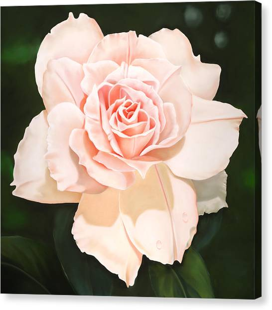 Pale Pink Rose Canvas Print by Ora Sorensen
