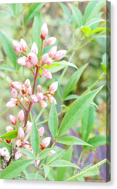 Canvas Print featuring the photograph Pale Powder Pink Plant by Ivana Westin