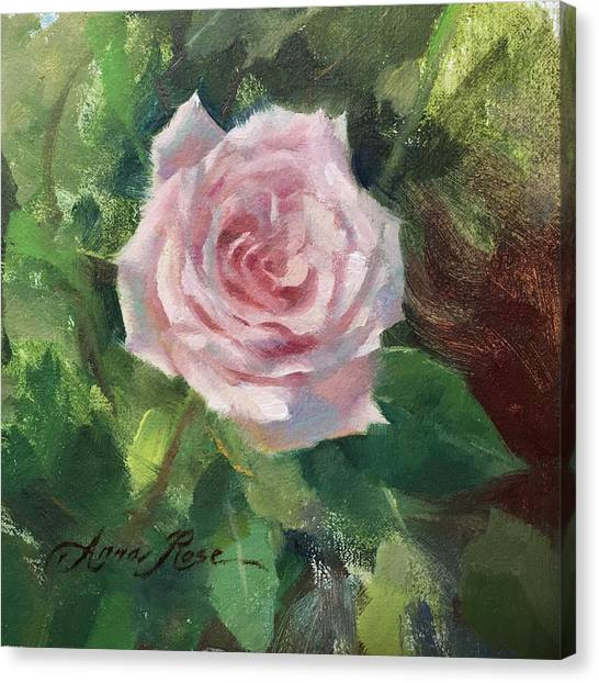 Valentines Day Canvas Print - Pale Rose Study by Anna Rose Bain