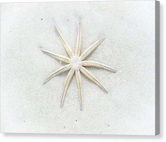 Pale Star Canvas Print