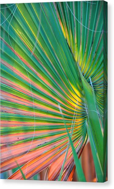 Palm Colors Canvas Print