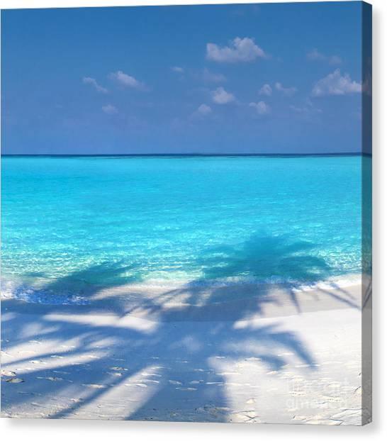Coconut Canvas Print - Palm Escape -  Part 2 Of 3 by Sean Davey