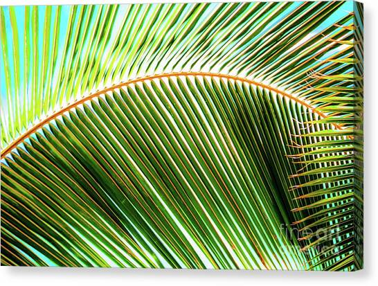 Palm Frond Sway Canvas Print