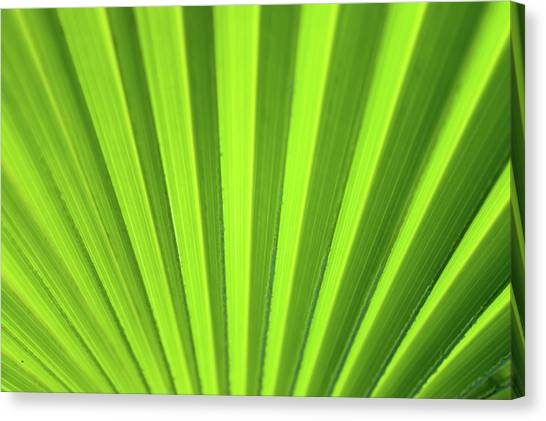 Canvas Print featuring the photograph Palm Leaf Abstract by Denise Bird