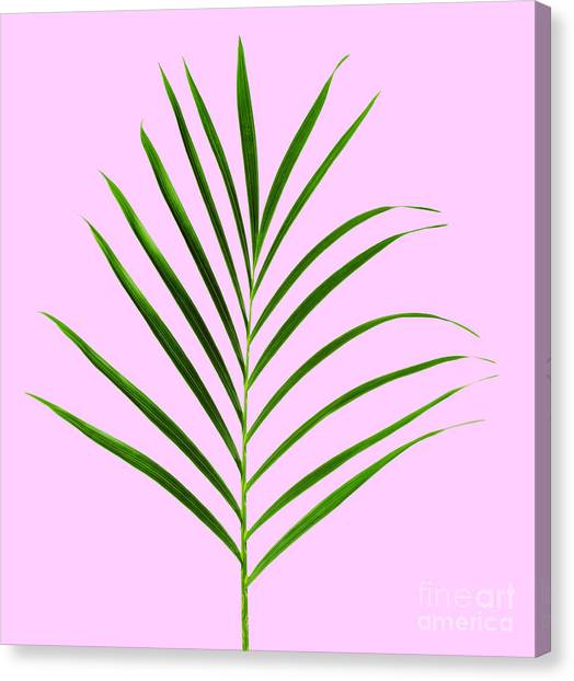 Purple Canvas Print - Palm Leaf by Tony Cordoza